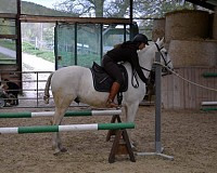 Working Equitation mit Sandra