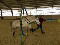Horse-Agility1