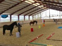 Horse-Agility2