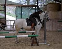 Working Equitation mit Sandra